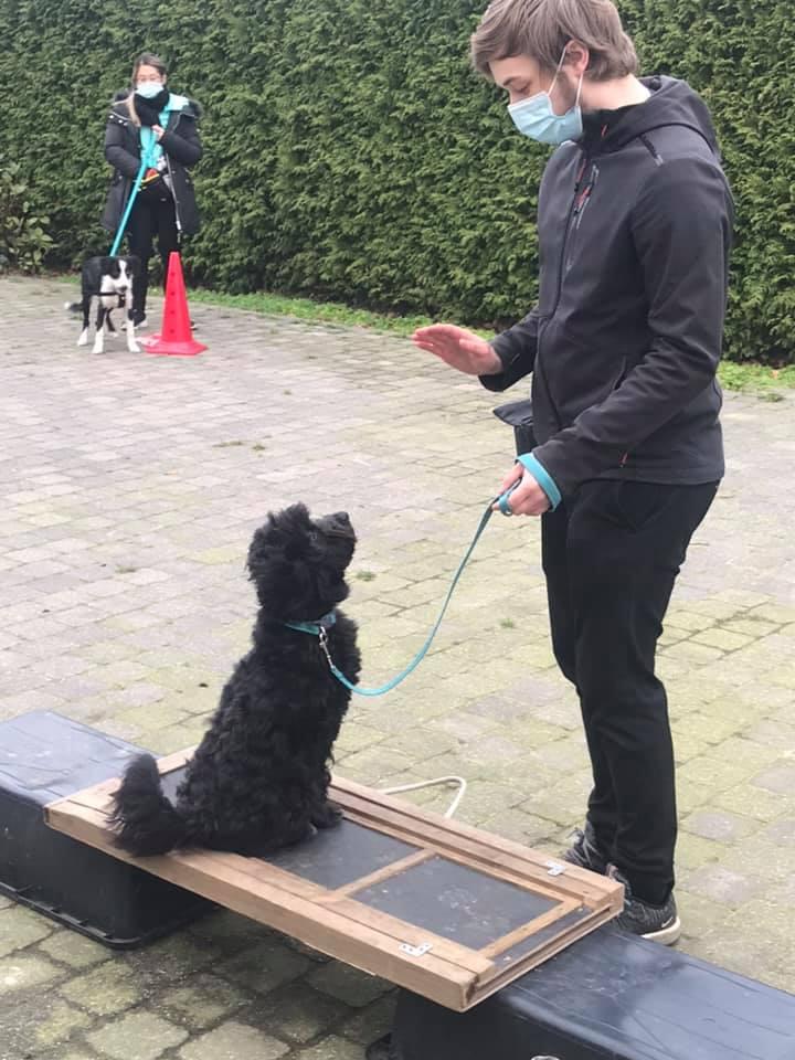 Puppy-plus cursus ( 6 lessen) VOLZET