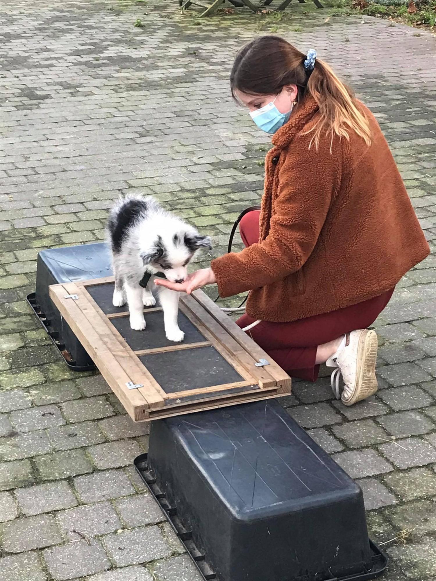 Puppycursus (6 lessen)