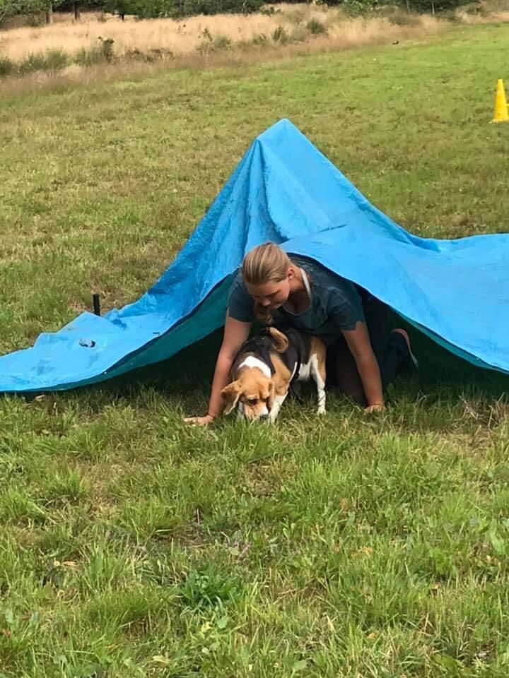 Workshop dogsurvival