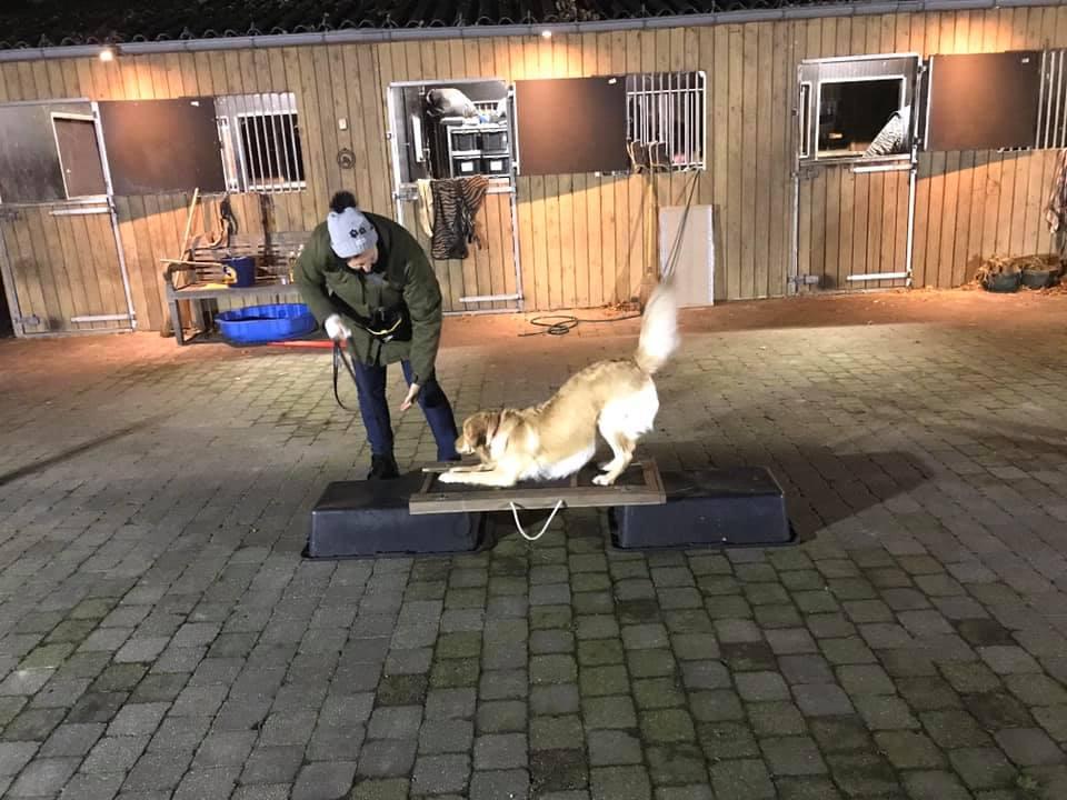 Workshop leer je hond een trucje